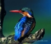 "Photosilk Malachite Kingfisher 8x12"" Microfiber Lens Cloth"