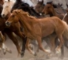 "Photosilk Running Horses 8x12"" Microfiber Lens Cloth"