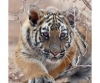 "Photosilk Tiger Cub 8x12"" Microfiber Lens Cloth"